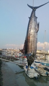 Pesca_nautico_1